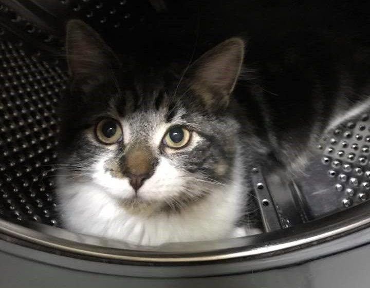Cat in Washing Machine